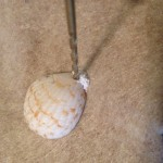 Drill a small hole through your seashell to create earrings and a necklace